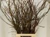 Salix Wilgenkatjes