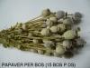 droogbloemen-005