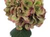 Hydrangea Sibilla Classic