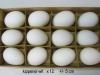 eieren-in-div-soorten-003