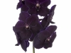 Dark Blue Purple
