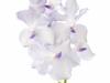Kanchana Lavender Mist
